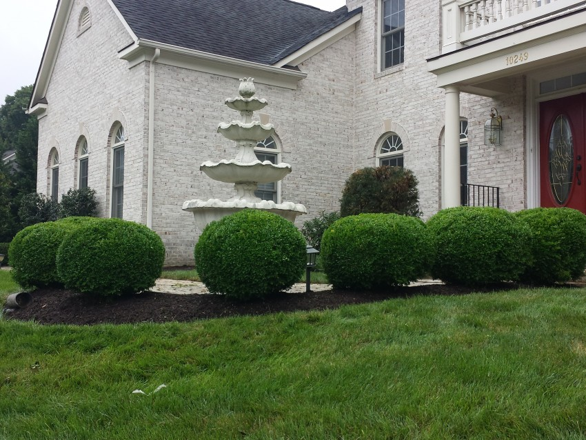 Nicely trimmed bushes and shrubs
